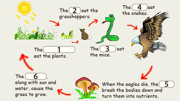 新知圖解》大自然是怎麼運作的呢?
