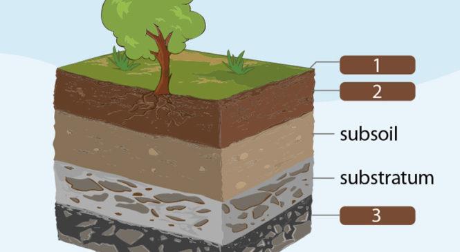 新知圖解》土壤分為哪幾層呢?
