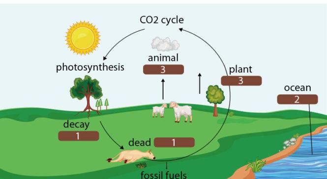 新知圖解》碳循環是什麼?