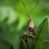 非洲蝗蟲進逼,台灣能否倖免?關注災情順便學多益英文