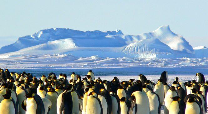 冰川挖出億年沉積物 南極曾有熱帶雨林
