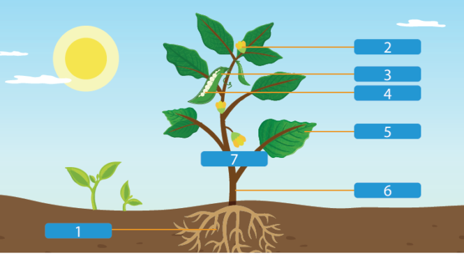 認識植物的身體